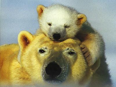 Манферто де Фабианис В.. Детеныши животных. Самые лучшие фотографии 0x0