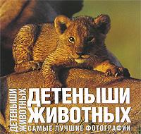 Анжела Сирена Ильдос Детеныши животных. Самые лучшие фотографии
