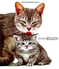 Джейн Бартон Жизнь кошек