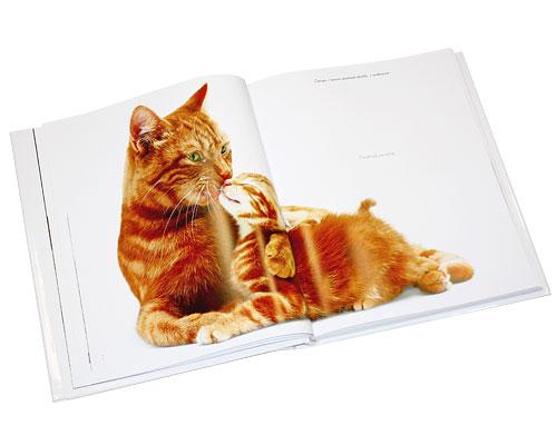 Жизнь кошек. Джейн Бартон