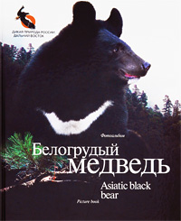 Белогрудый медведь / Asiatic Black Bear