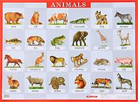 Animals. Наглядное пособие  для школы