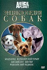 Энциклопедия собак: Бладхаунд, йоркширский терьер, датский дог, ши-тцу, родезийский риджбек подушка ши тцу