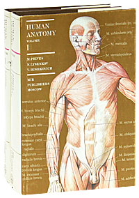 M. Prives, N. Lysenkov, V. Bushkovich Human anatomy (комплект из 2 книг) anatomical model of kidney human kidney anatomy model