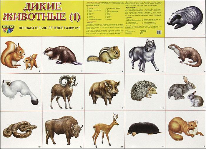 Дикие животные (1). Плакат
