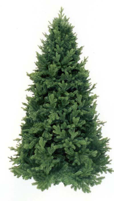 цена на Ель Триумф Царская, цвет: зеленый, высота 215 см
