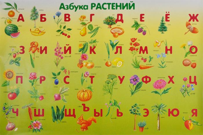харькове рынке цветочная азбука в картинках свечи