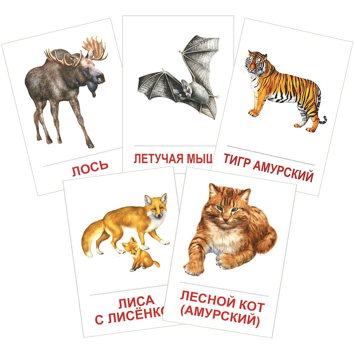 Дикие животные (набор из 16 карточек) одежда набор из 16 карточек