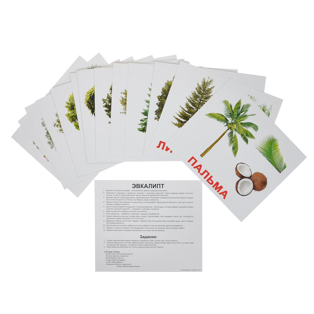 цена Обучающая игра Вундеркинд с пеленок Карточки Домана Деревья онлайн в 2017 году