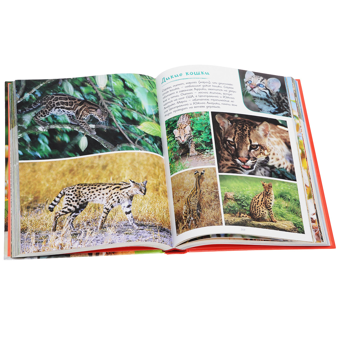 Книги с животными картинками
