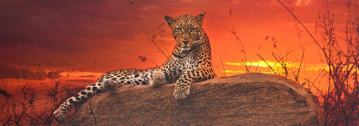 HEYEПазл Леопард на рассвете HEYE
