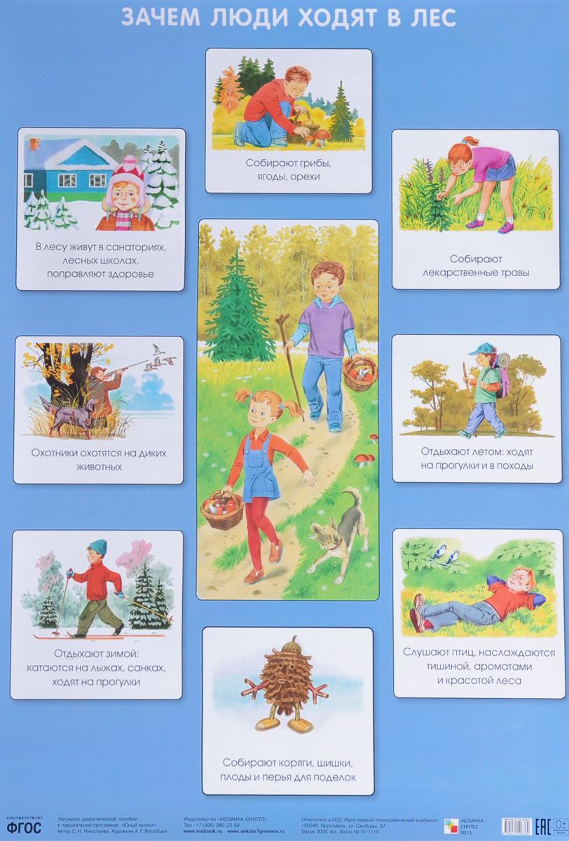 С. Н. Николаева Зачем люди ходят в лес. Плакат с н николаева как лесник заботится о лесе плакат