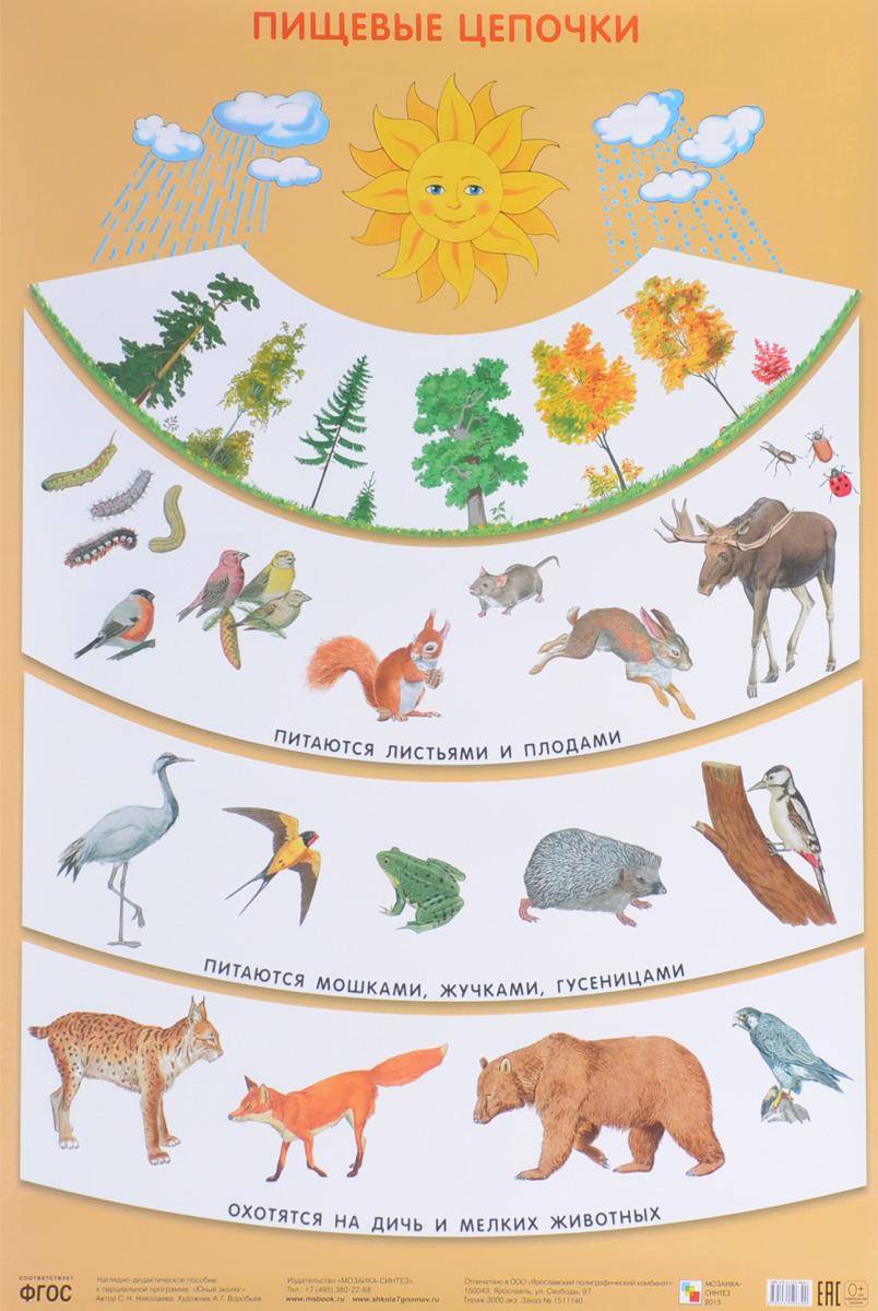 С. Н. Николаева Пищевые цепочки. Плакат с н николаева как лесник заботится о лесе плакат