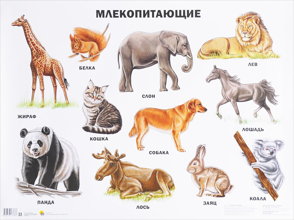 название групп животных с картинками накрутки волос