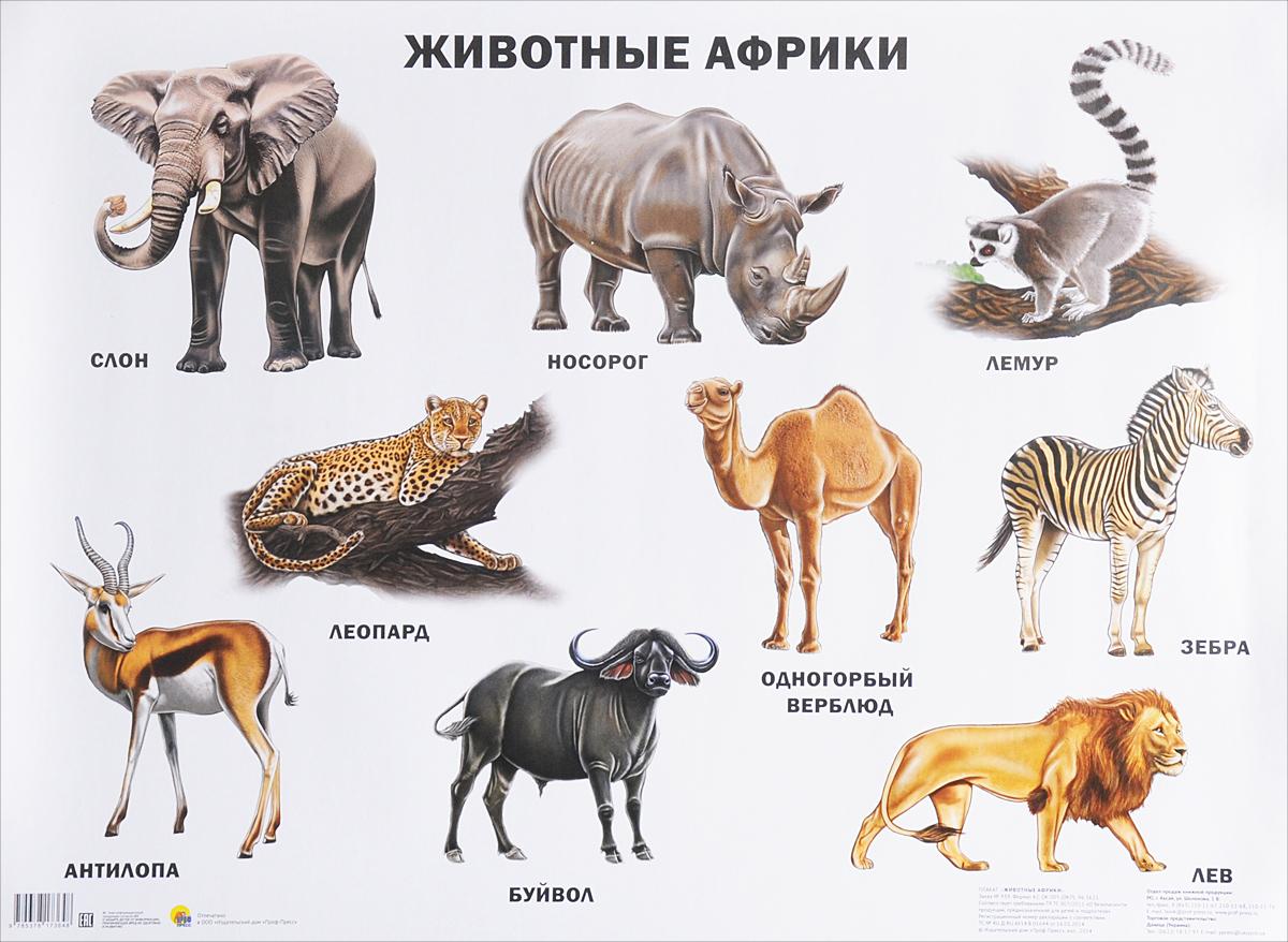 Животные Африки. Плакат все цены