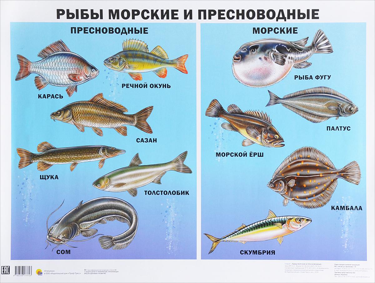 Рыбы морские и пресноводные. Плакат атлас аннотированный рыбы пресноводные и полупроходные