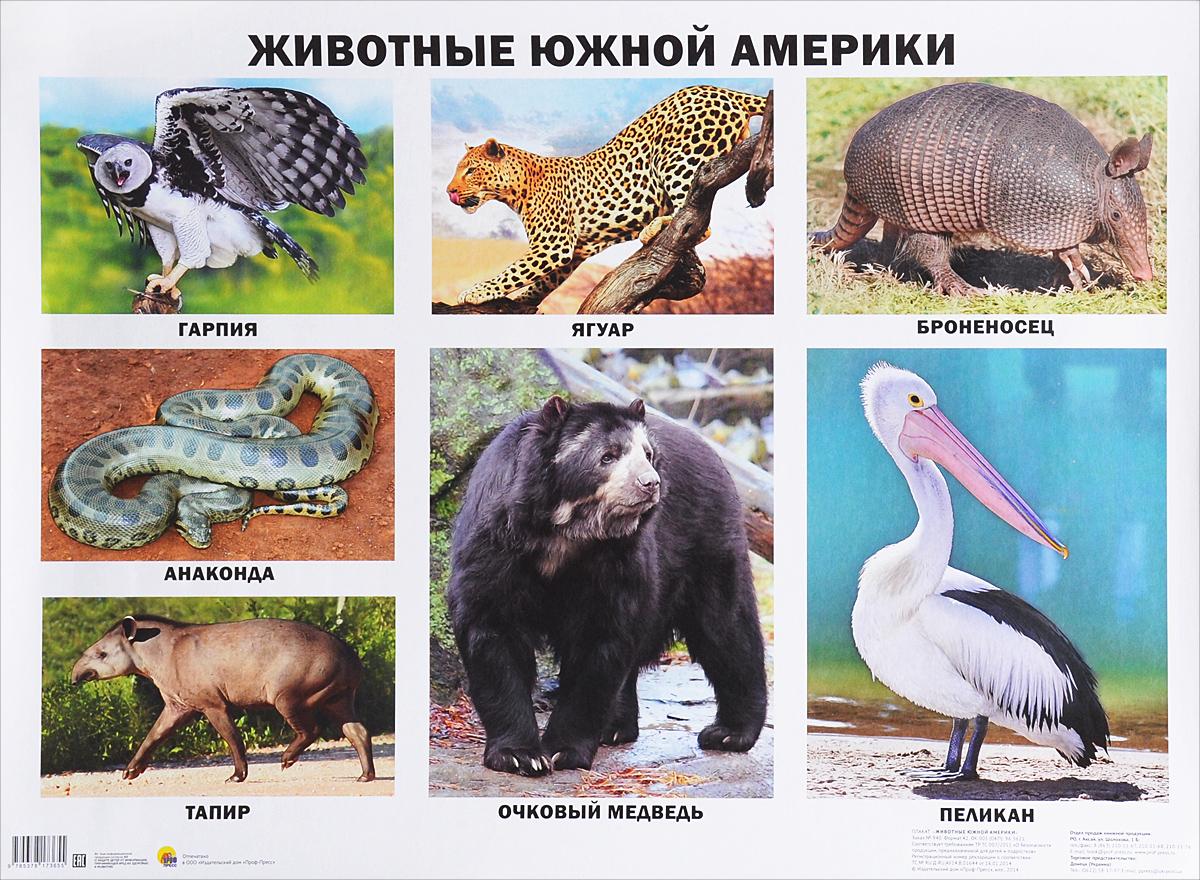 даже животные южной америки фото с названиями необходимые