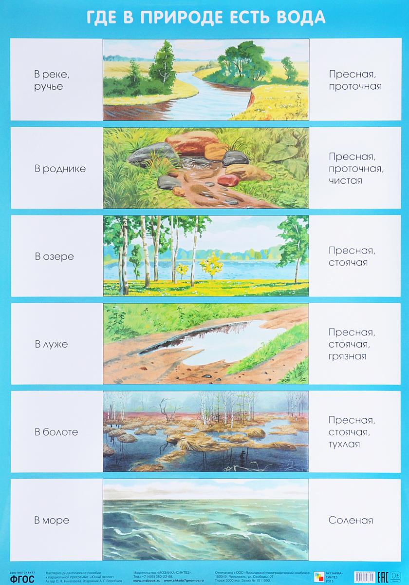 С. Н. Николаева Где в природе есть вода. Плакат с н николаева как лесник заботится о лесе плакат
