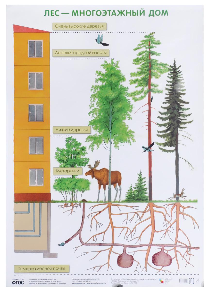 С. Н. Николаева Лес - многоэтажный дом. Плакат с н николаева как лесник заботится о лесе плакат