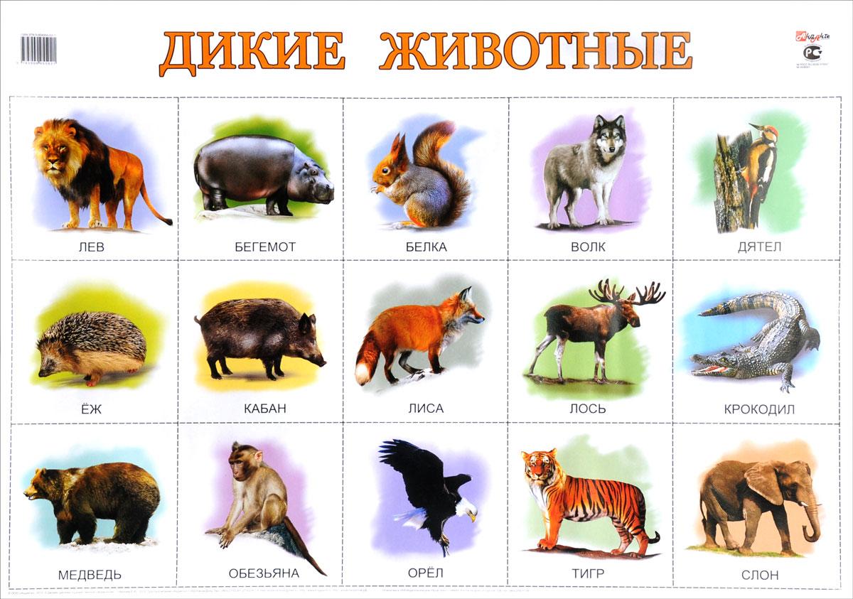 картинки диких и домашних животных с описанием мероприятия организаторы