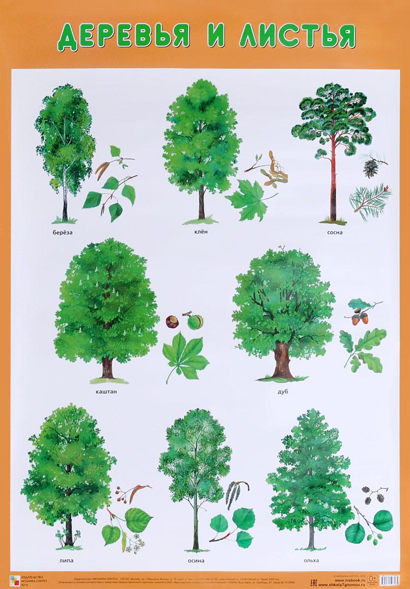 особенно популярным виды деревьев в картинках их листья спутниковой