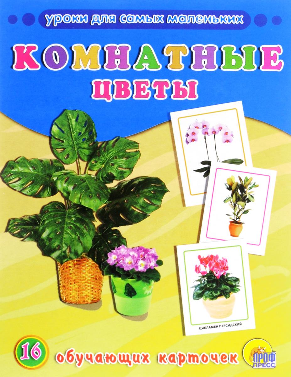 Комнатные цветы (набор из 16 обучающих карточек) цветы 16 обучающих карточек