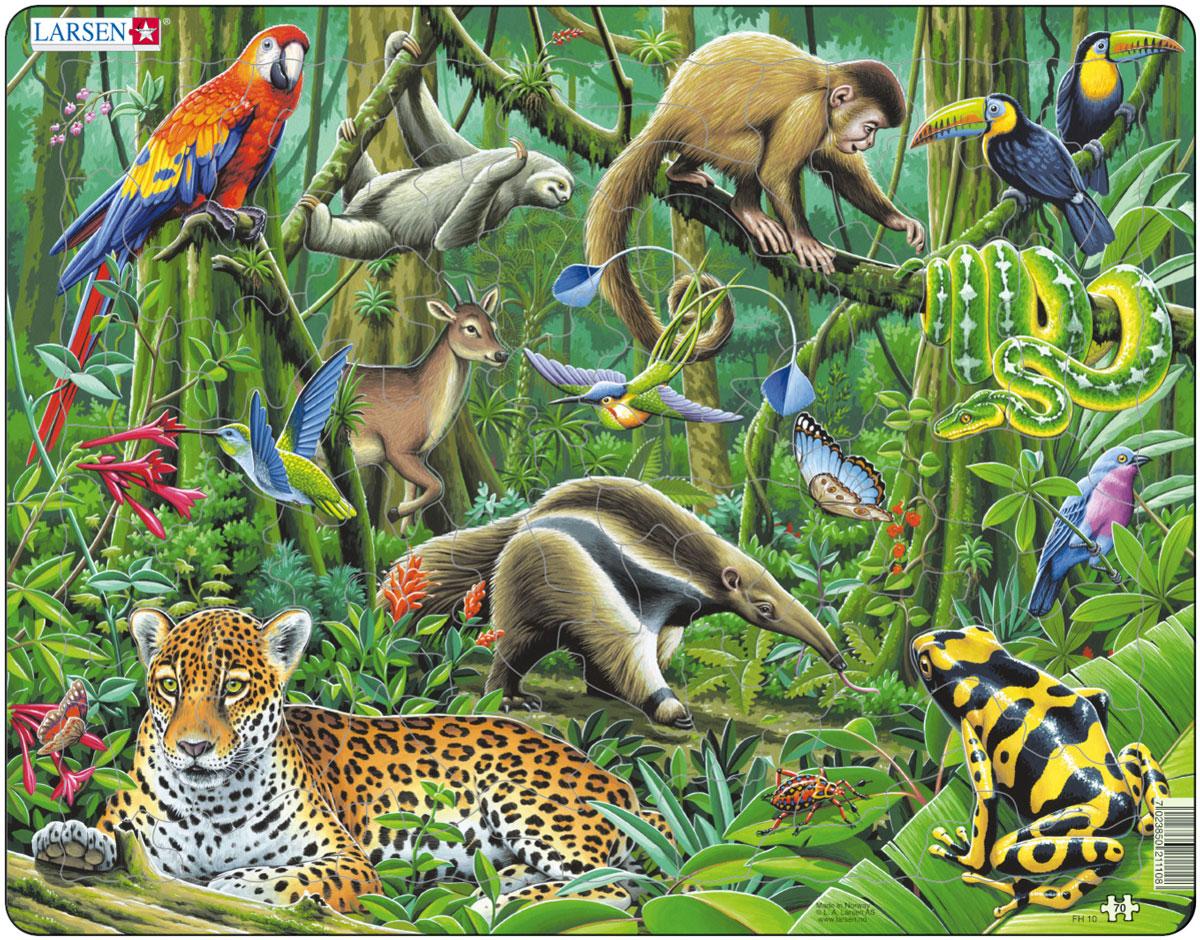 весь животный мир в картинках отчаянно нуждается трех