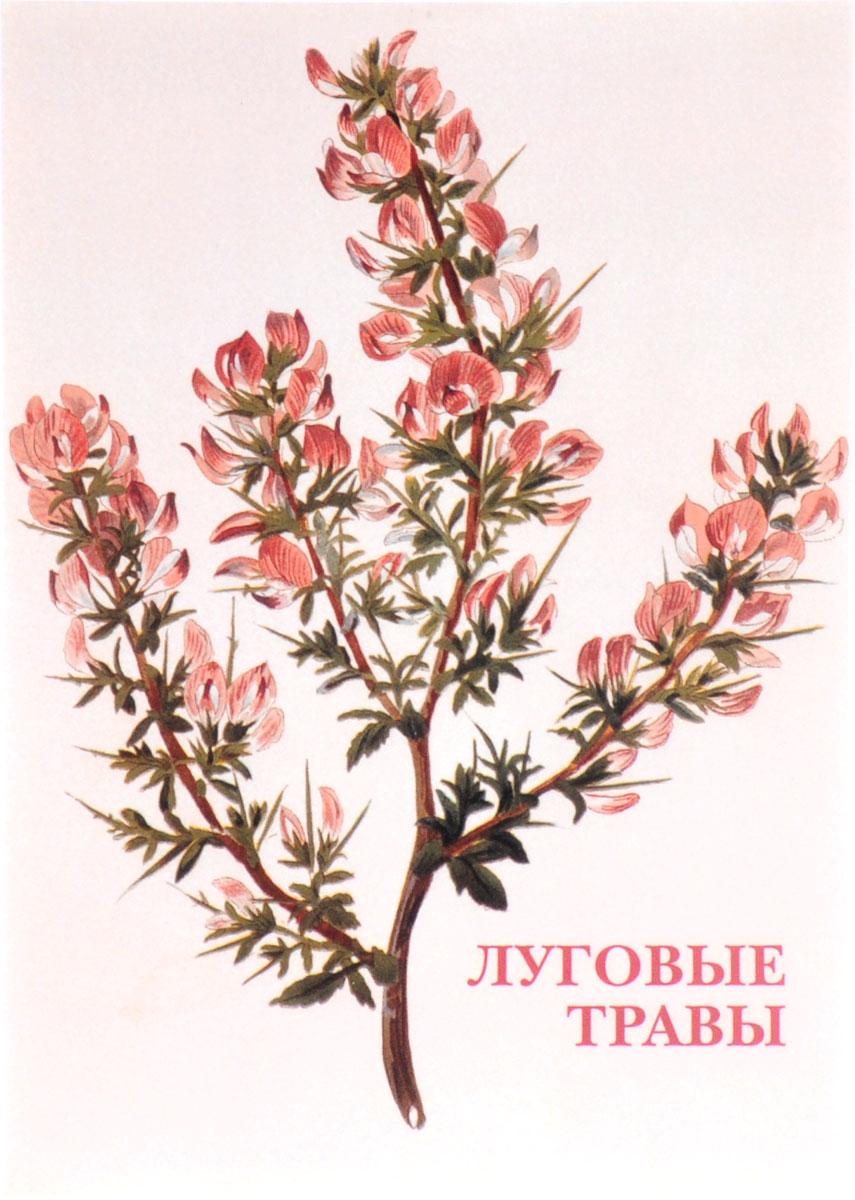 Луговые травы (набор из 15 открыток) луговые травы набор из 15 открыток