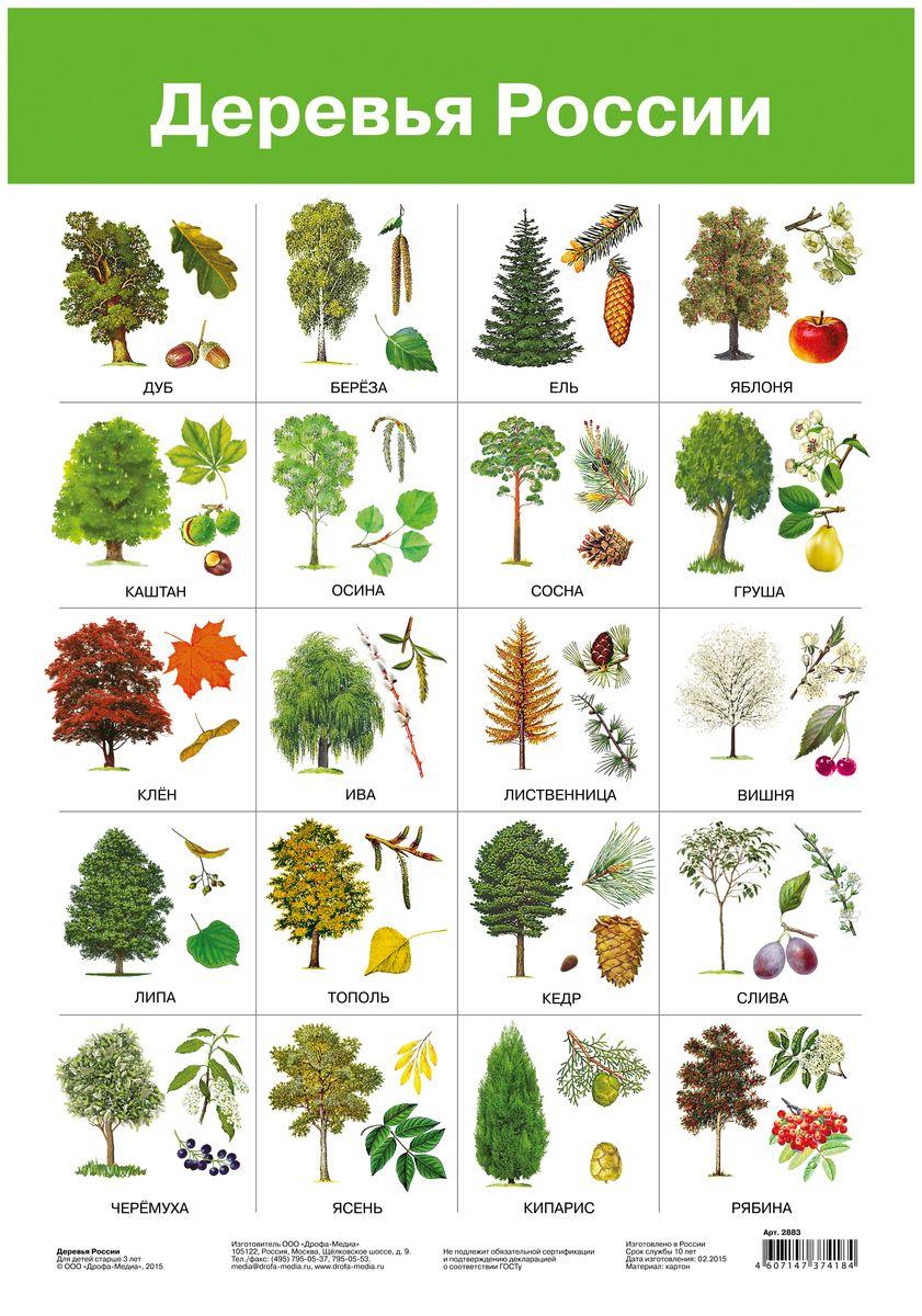 пикачу виды деревьев в картинках их листья милые, улыбающиеся