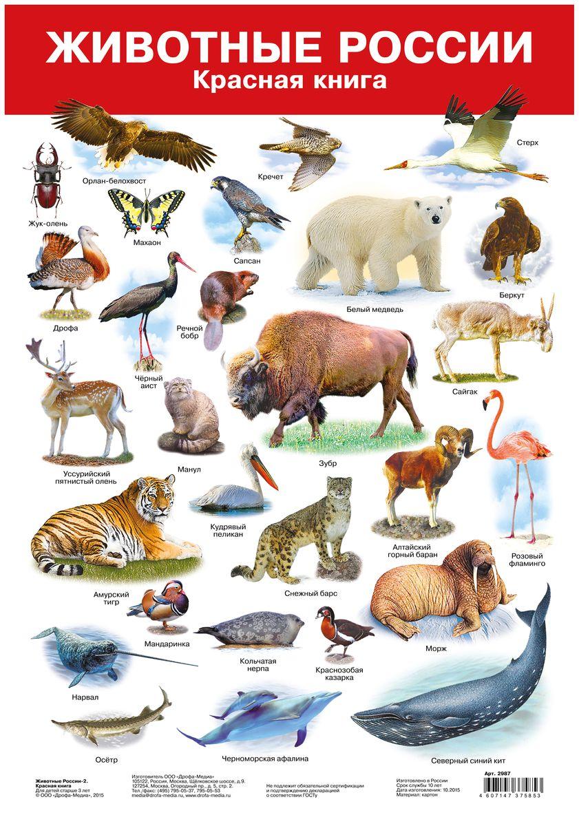 Животные из красной книги с названием и картинками