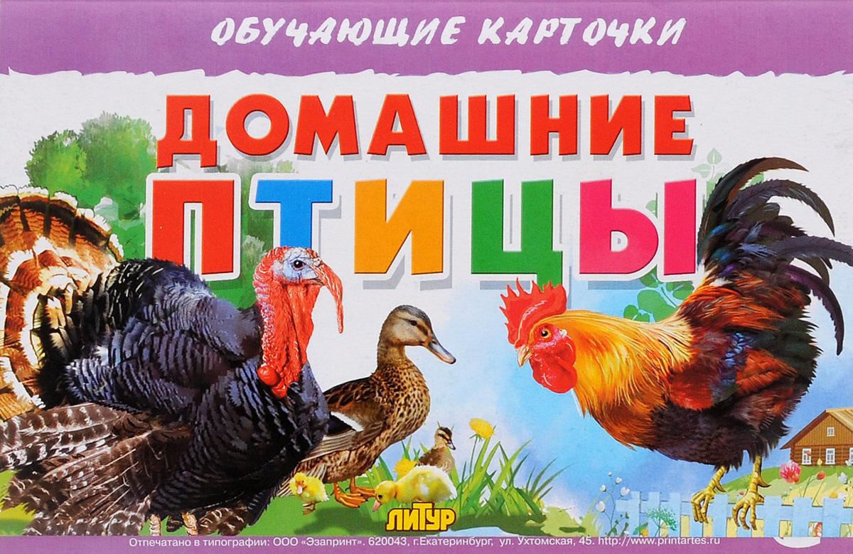 уроки невозможно домашние птицы фото описание знаю, зачем
