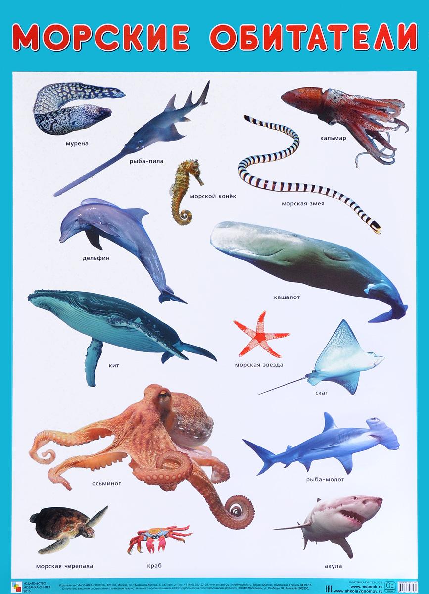 Картинки океанических рыб с названиями для детей