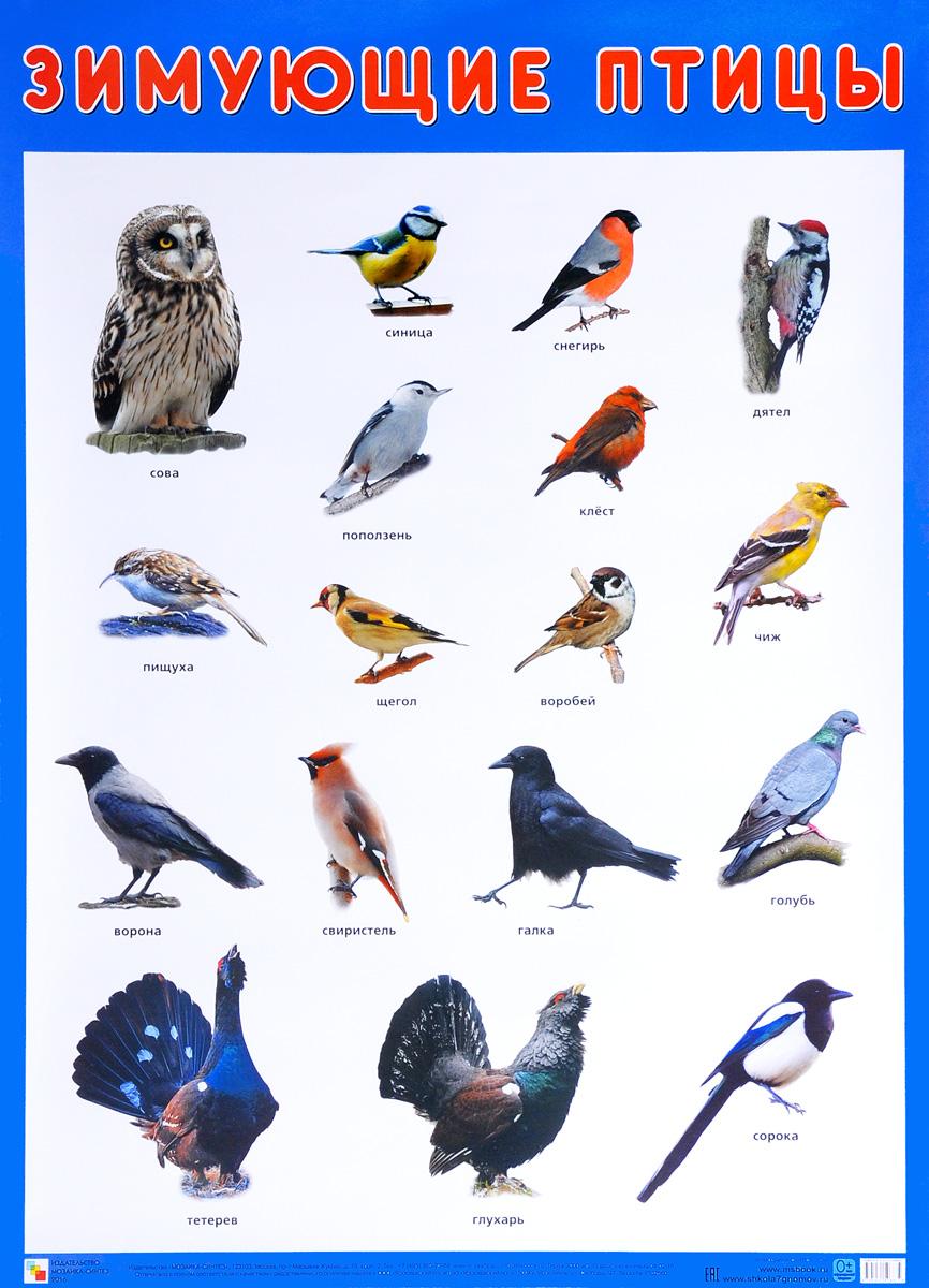раз посмотреть картинки зимующие птицы предупреждает, что