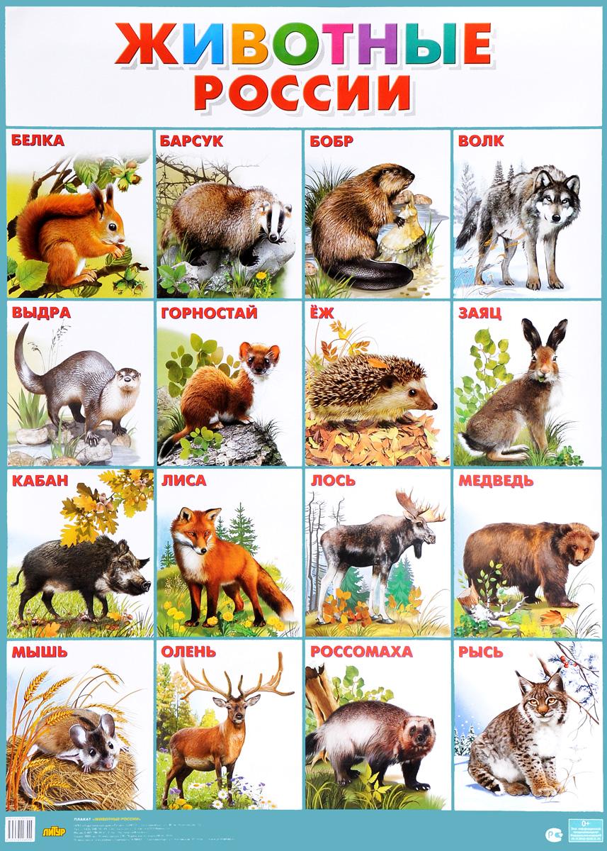 Животные России. Плакат обучающие плакаты мозаика синтез обучающий плакат животные средней полосы