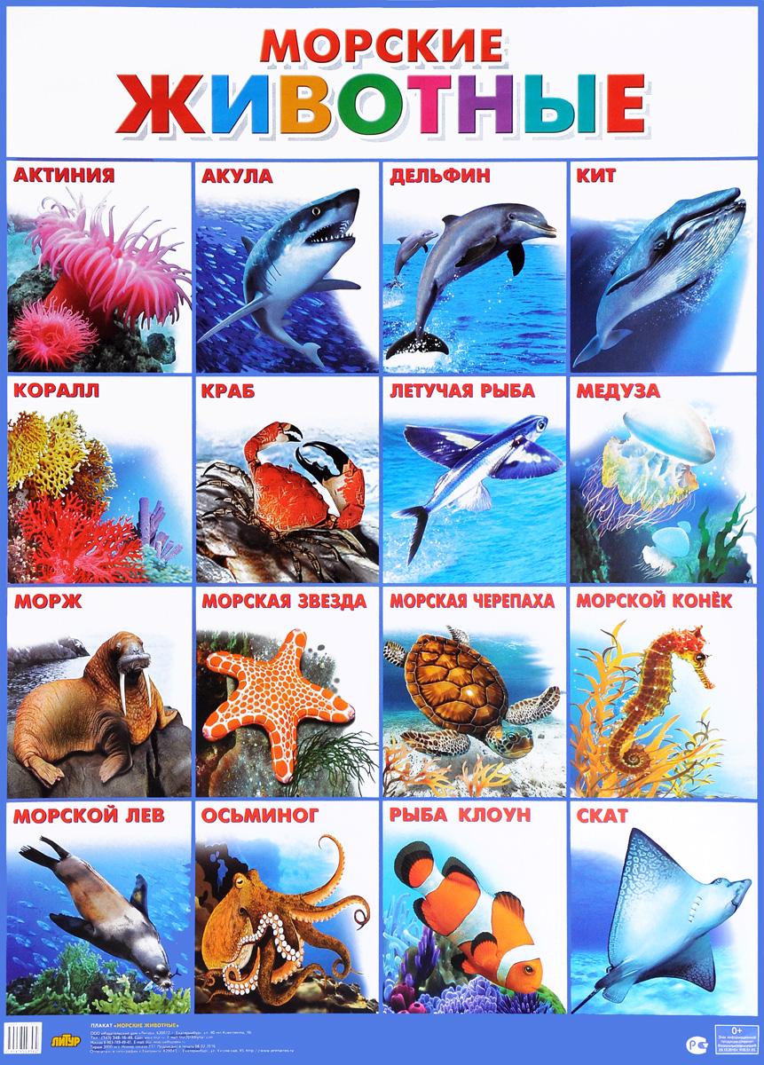 Морские животные. Плакат обучающие плакаты мозаика синтез обучающий плакат животные средней полосы