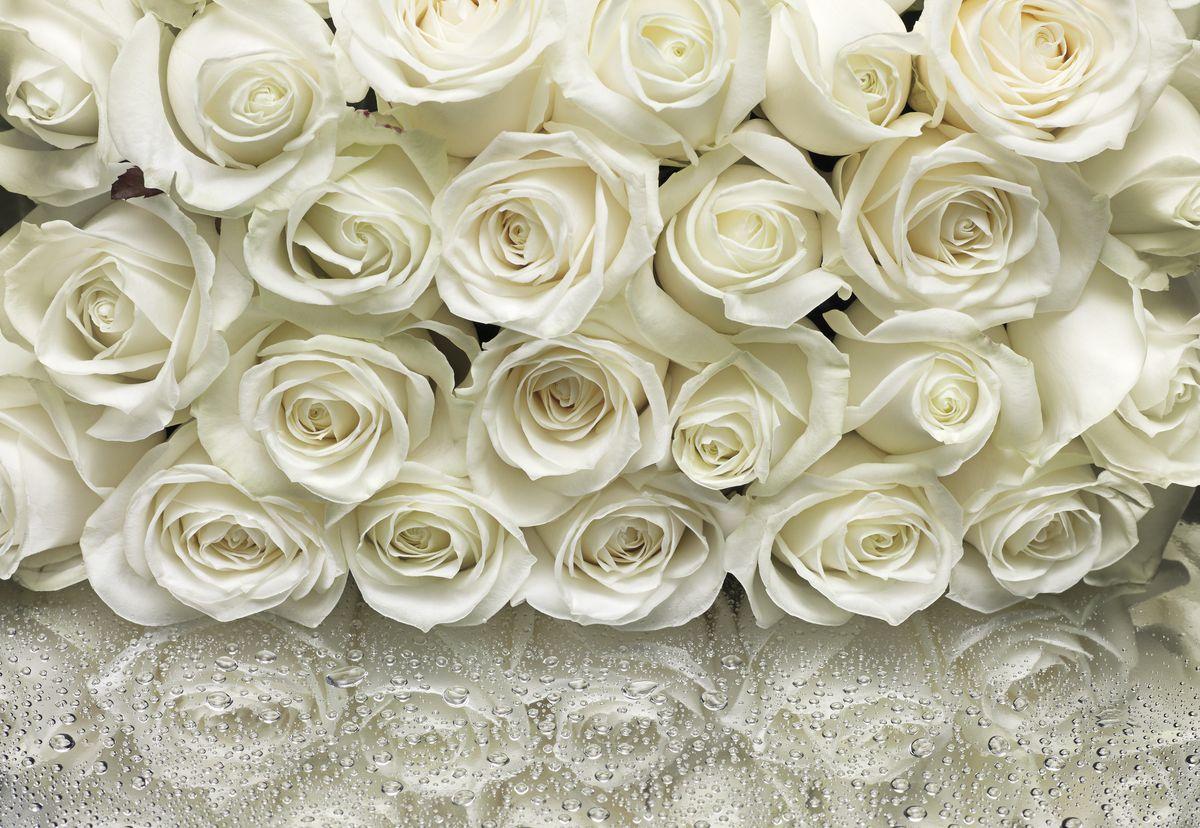 Гифы про, картинки с белыми розами красивые