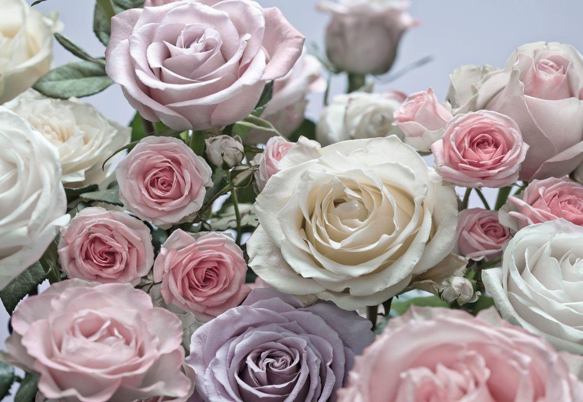 первый раз, фотообои с розами умеют так много