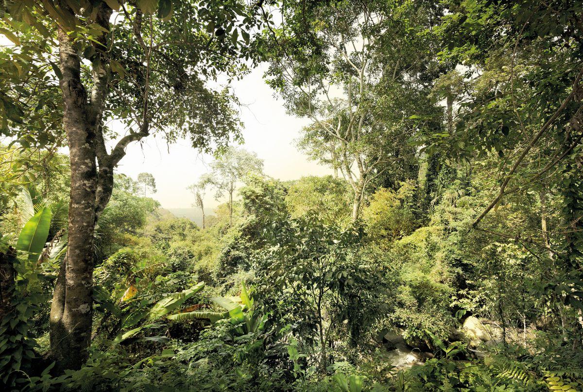 Фотообои Komar Джунгли, 3,68 х 2,48 м цена