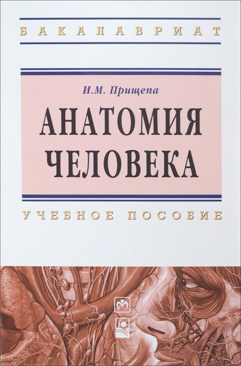 И. М. Прищепа Анатомия человека. Учебное пособие