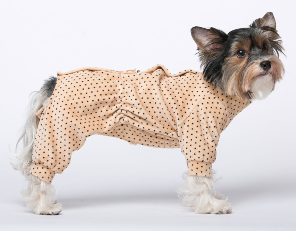 доводы одежда для собак маленьких пород картинки комплект входит тумба