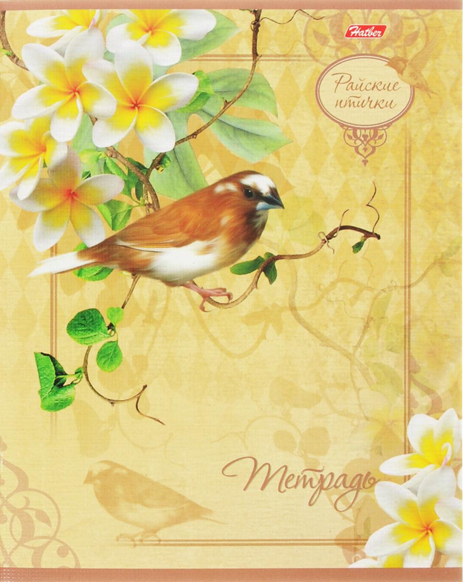 Hatber Тетрадь Райские птички 48 листов в клетку 14819 hatber тетрадь russia 48 листов в клетку