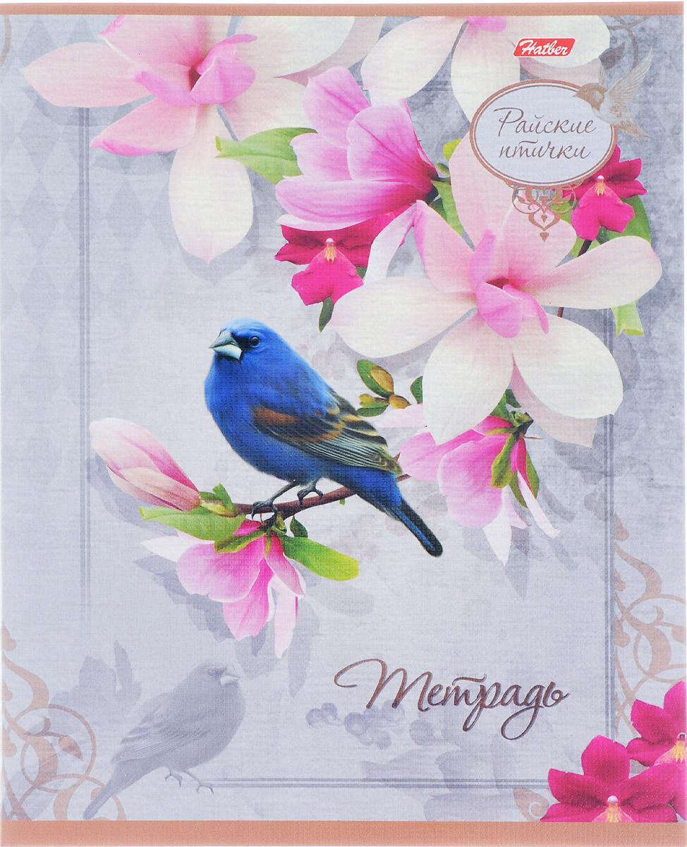 Hatber Тетрадь Райские птички 48 листов в клетку 14816 hatber тетрадь angry birds 48 листов в клетку цвет голубой розовый