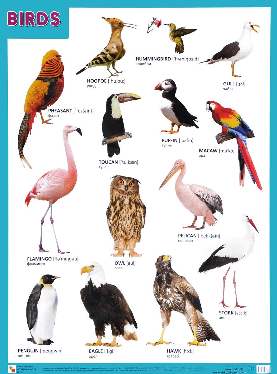 как найти название птицы по картинке радостную