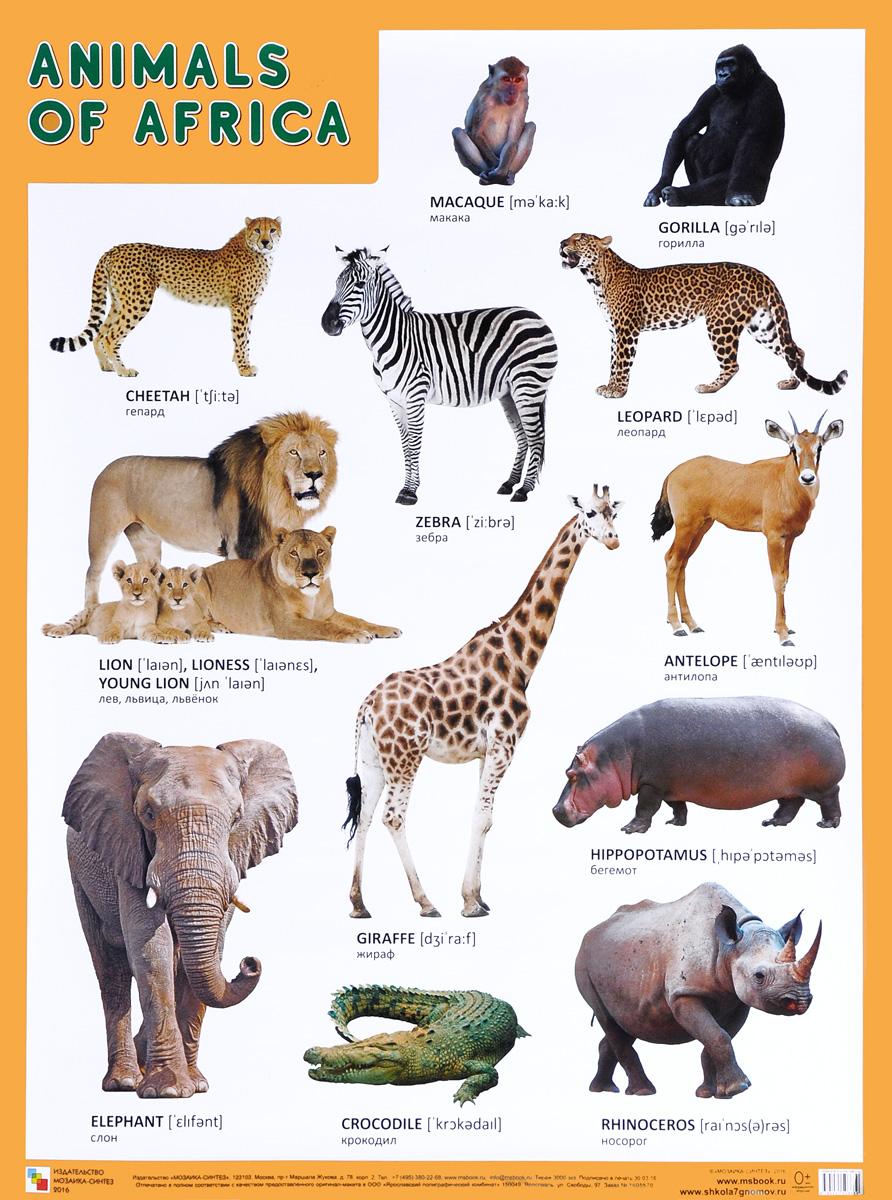 Animals of Africa / Животные Африки. Плакат все цены