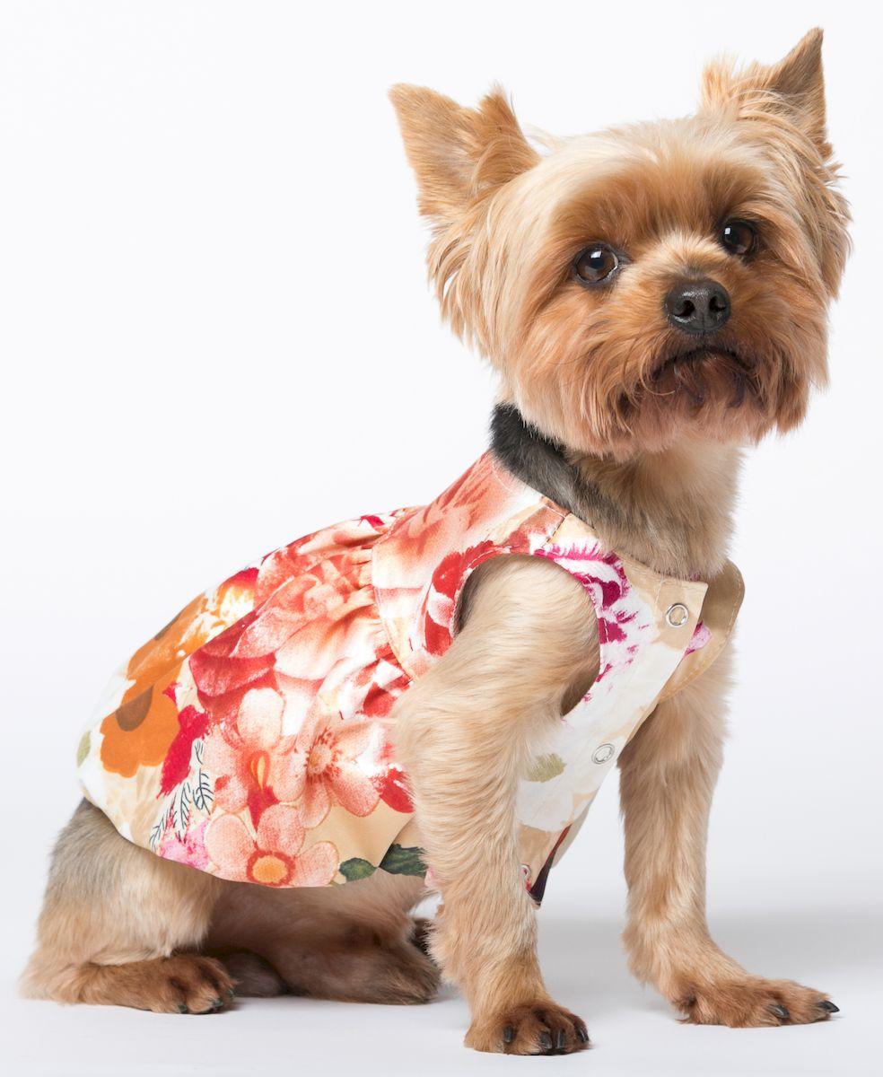 одежда для собак маленьких пород картинки этот раз