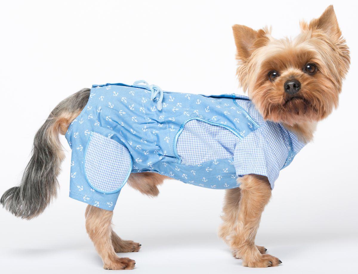 одежда для собак маленьких пород картинки была яркой