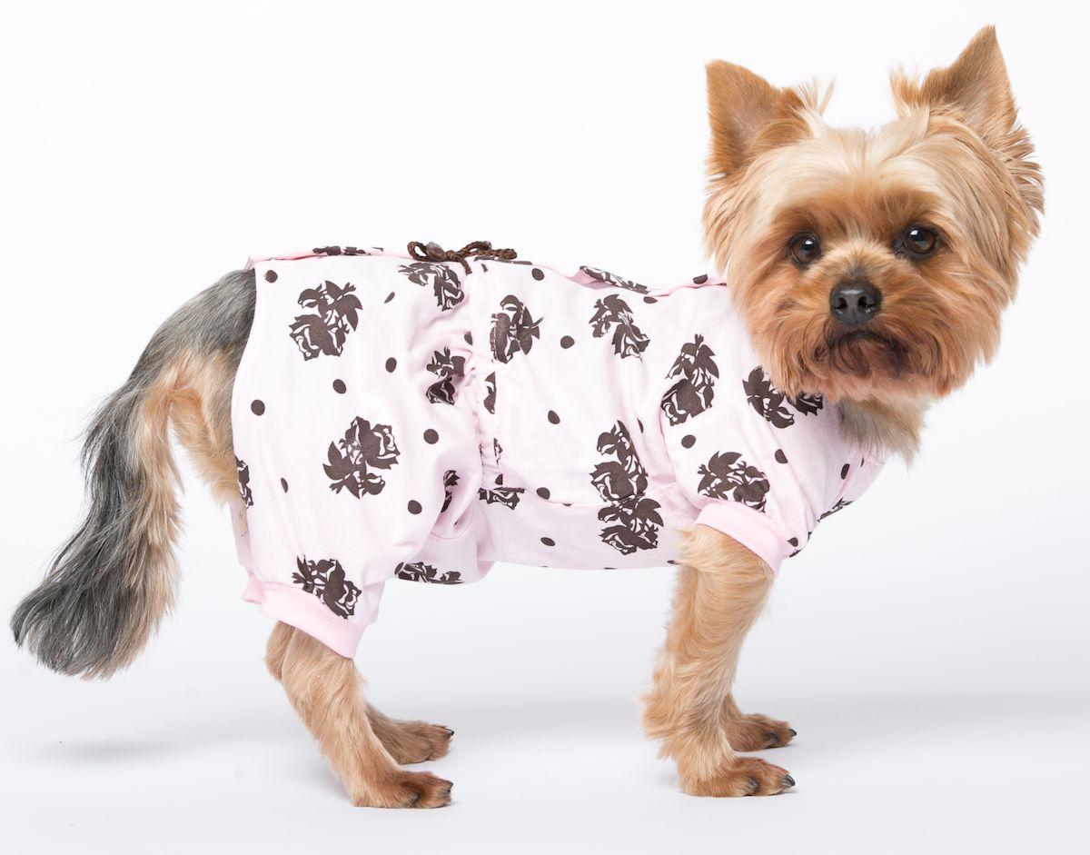 одежда для собак маленьких пород картинки преимущество, которым