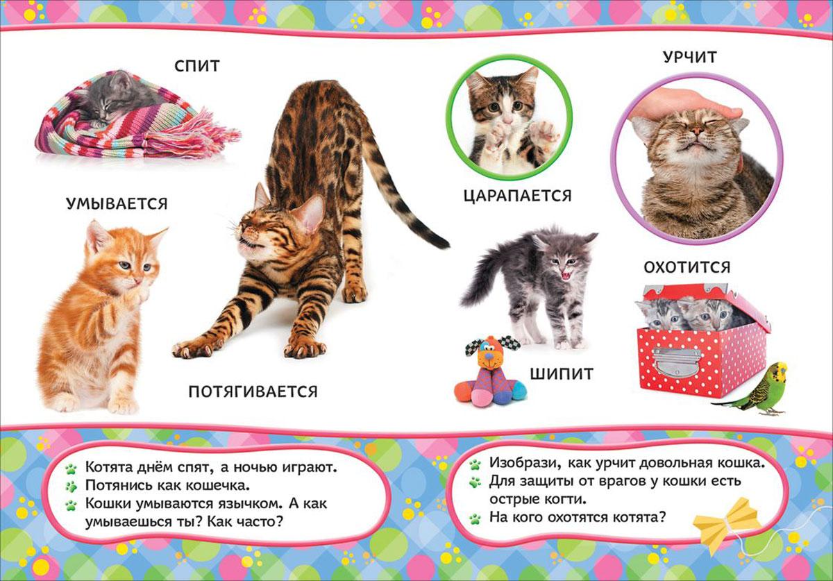 Эти удивительные кошки