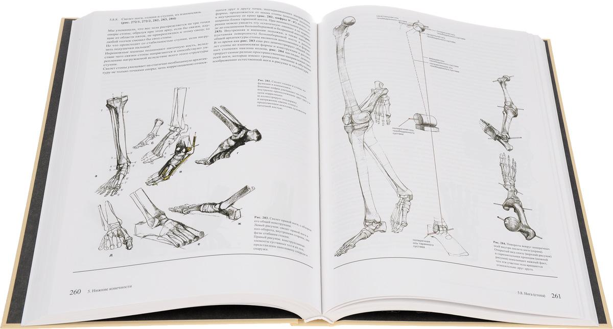 Образ человека. Учебник и практическое руководство по пластической анатомии для художников | Баммес Готфрид. Готтфрид Баммес