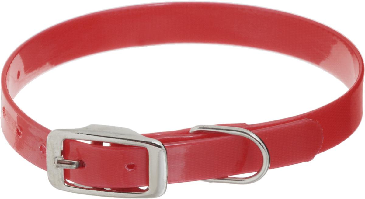Ошейник для собак Каскад Синтетик, цвет: красный, ширина 1,5 см, обхват шеи 21-30 см ошейник для собак каскад с косынкой цвет красный ширина 10 мм обхват шеи 22 35 см